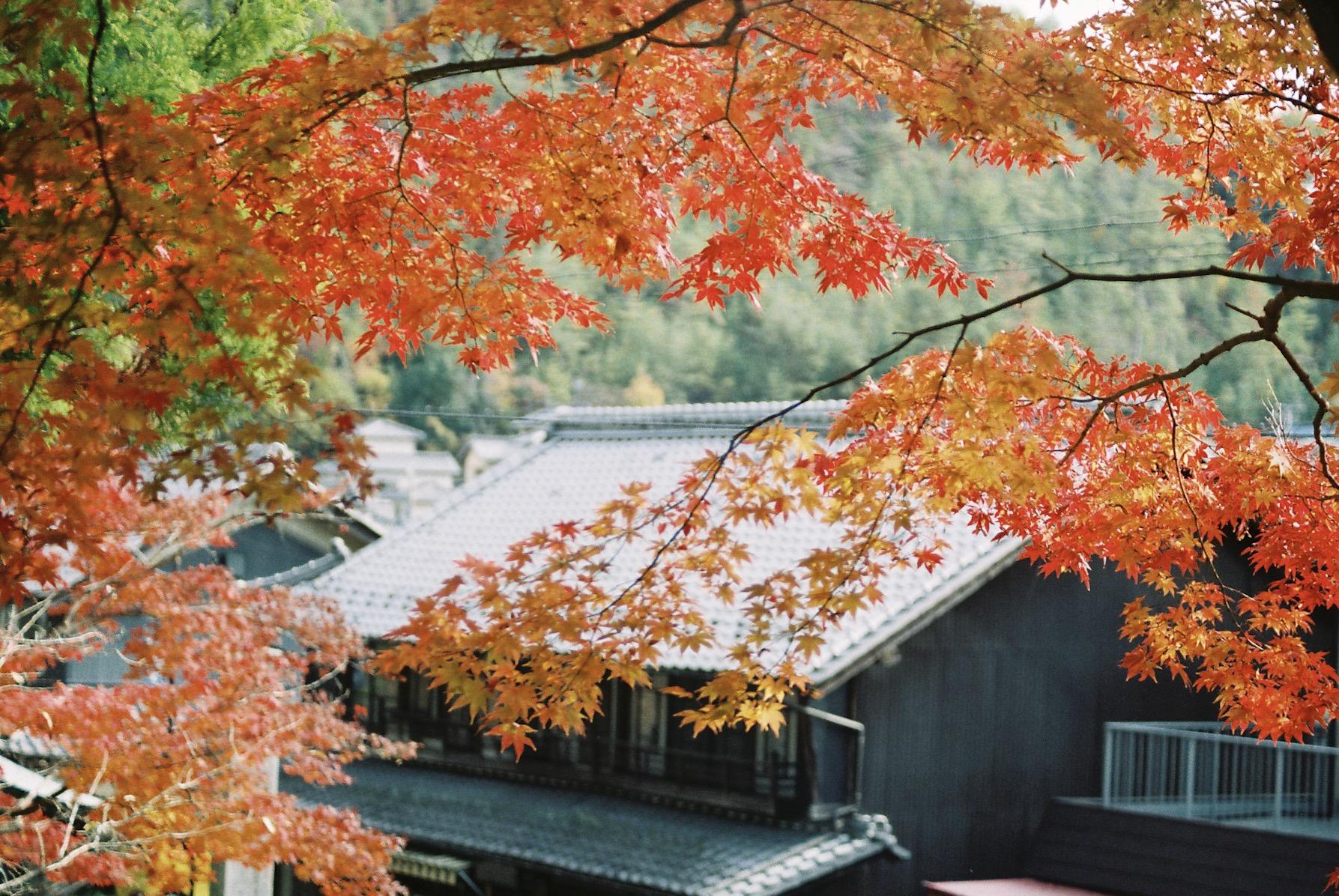 岩井山延算寺の紅葉